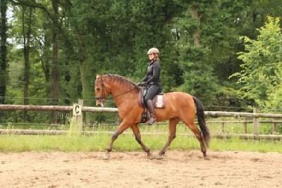 Wat je moet doen als je paard 'achter de teugel' loopt?