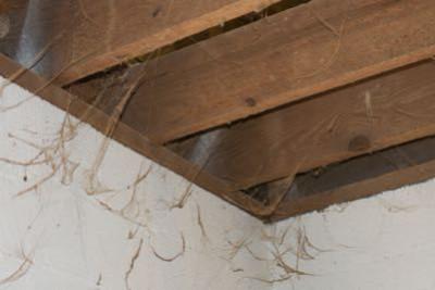 Spinnenwebben gevaarlijk?