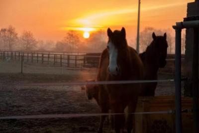 Wat is er natuurlijk aan natuurlijk paarden houden