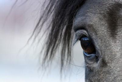 Heeft jouw angst invloed op paardengedrag?